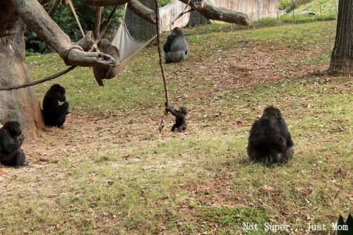 Baby Gorilla Zoo Atlanta