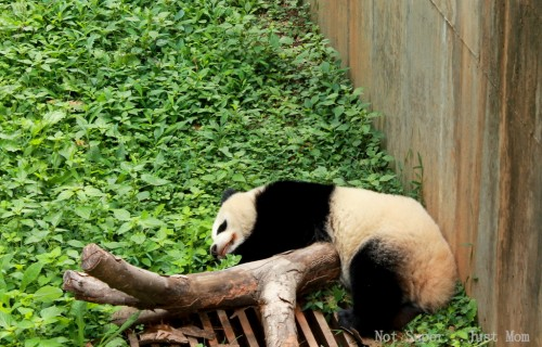 Panda Zoo Atlanta